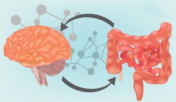 Második agyunk – az enterális idegrendszer